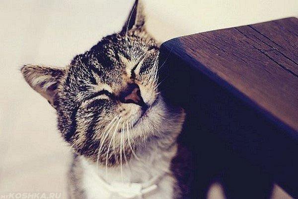 Зачем кошки трутся об разные предметы? НЕЛЬЗЯ, Они, когда, кошек, об тебя, отгонять, трутся