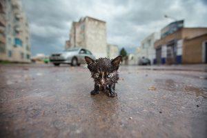 Я побитый и грязный шагаю по улице. Совсем озяб. Дождь не прекращается…