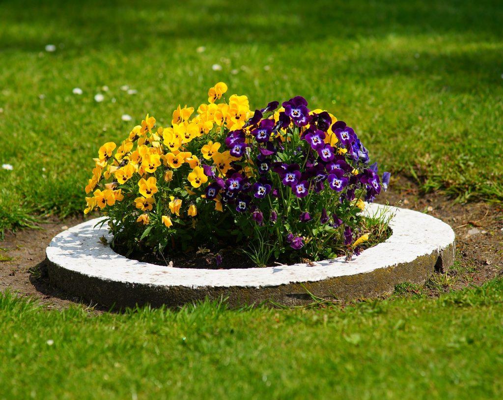 как сажать цветы в клумбу