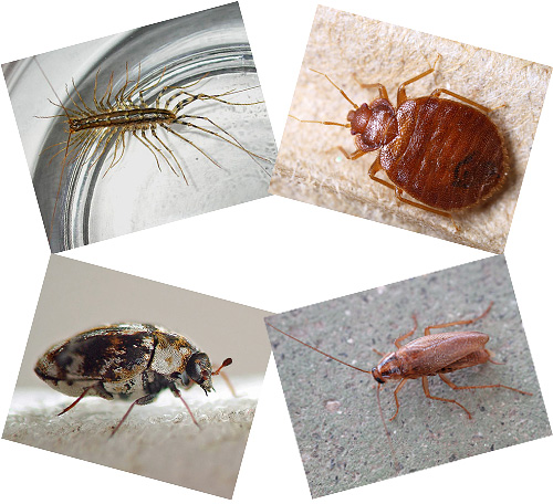 паразиты под кожей людей