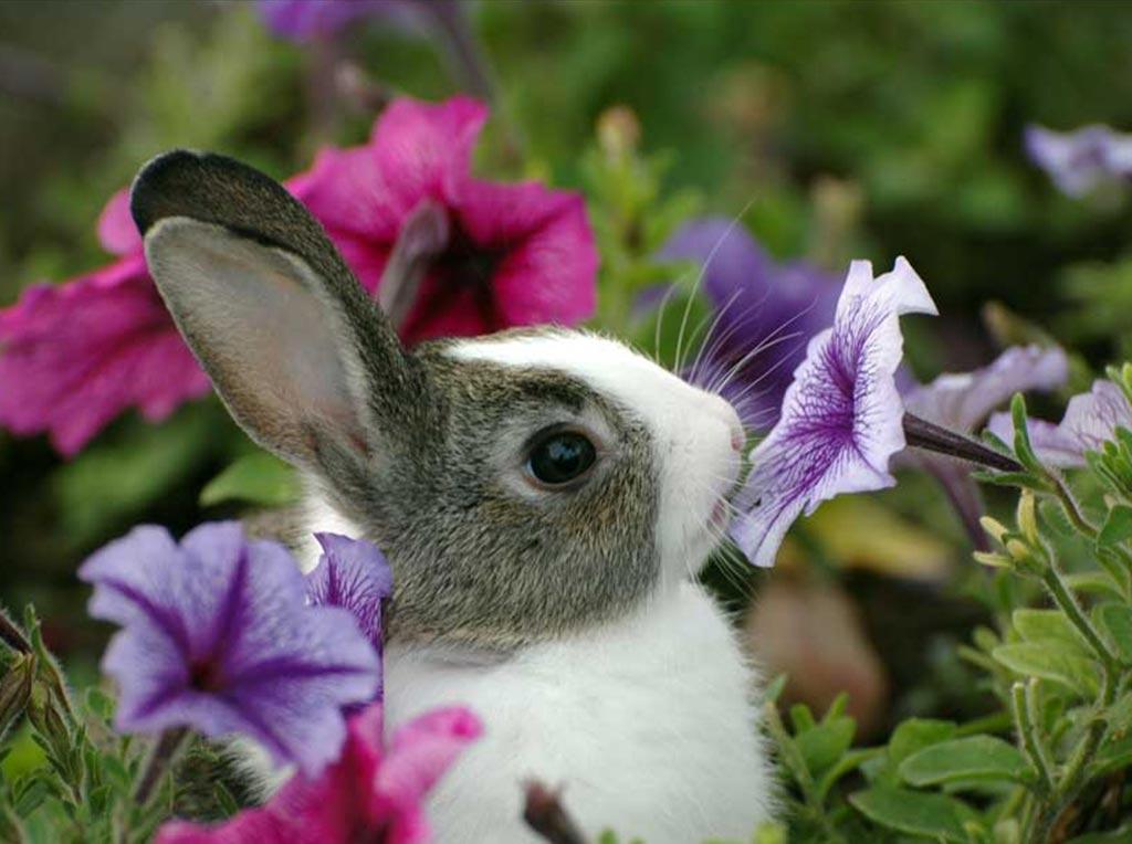 ставрополе очень милые картинки с цветами ваш день, все
