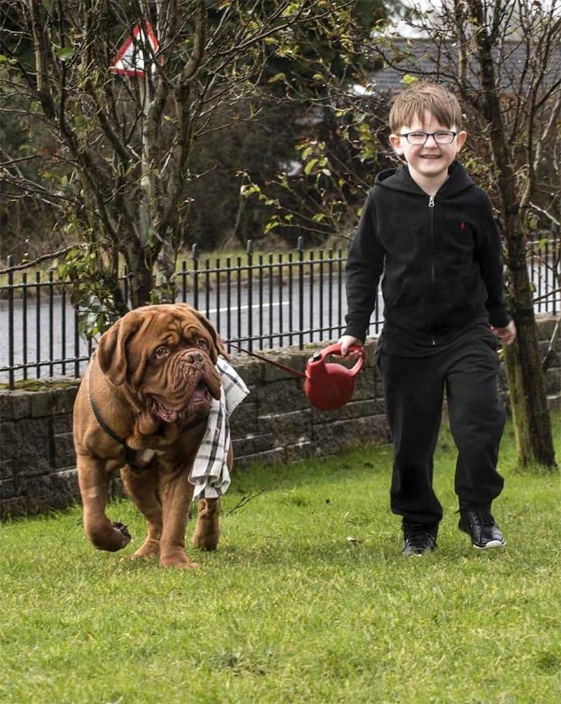 Родители заметили, что пес всегда находился справа от мальчика.