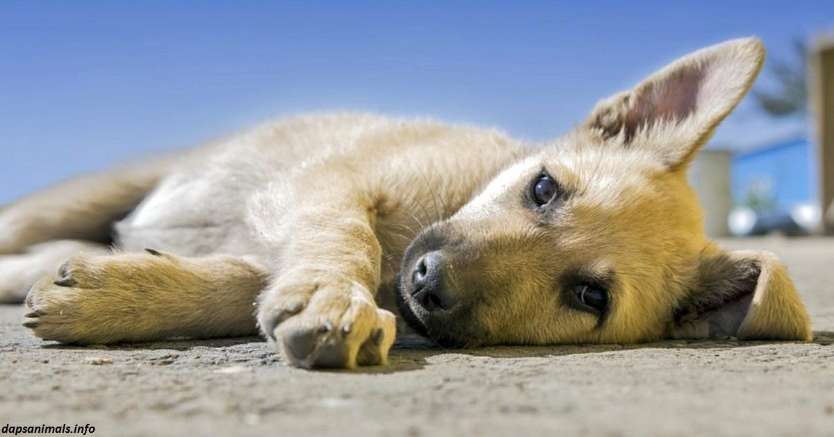 В Голландии не осталось бродячих собак