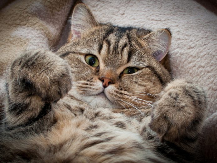 Котики не перестают удивлять…
