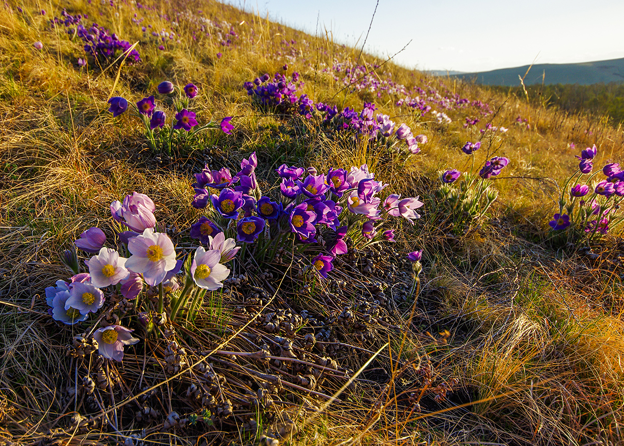 это картинки цветы хакасия языке