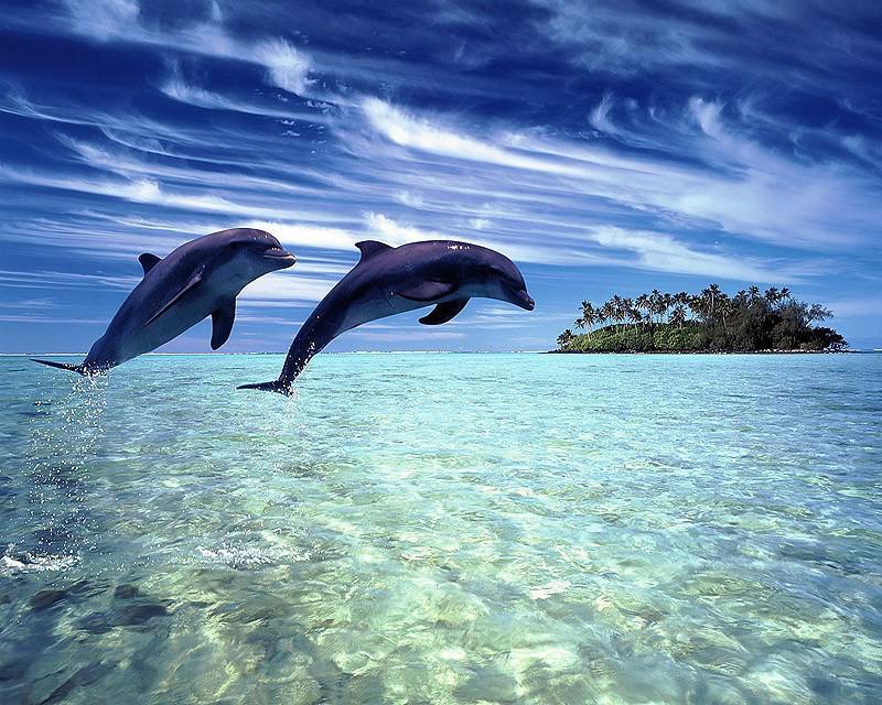 Неразгаданные тайны дельфинов