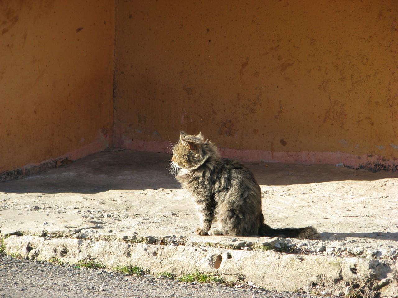 Братья наши меньшие: кошка живет на автобусной остановке