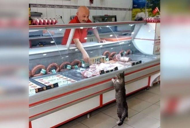 Каждый день этот кот приходит в мясную лавку.
