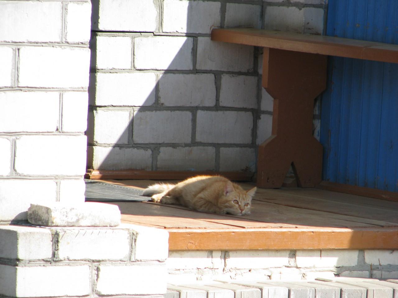 Братья  наши меньше: так как кошка выбирает  место для  сна?