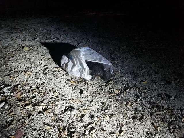 На земле валялся мешок… Полицейский заглянул внутрь — там был беспомощный котенок