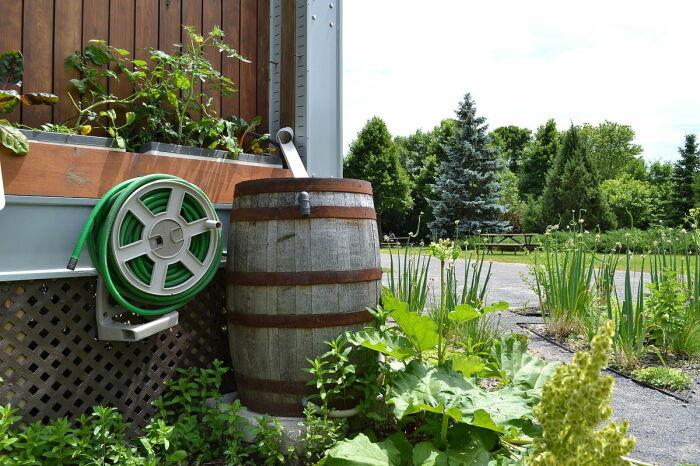 Что делать, чтобы вода в бочке на участке не зацвела: 3 простых и эффективных правила дача,полезные советы,сад и огород