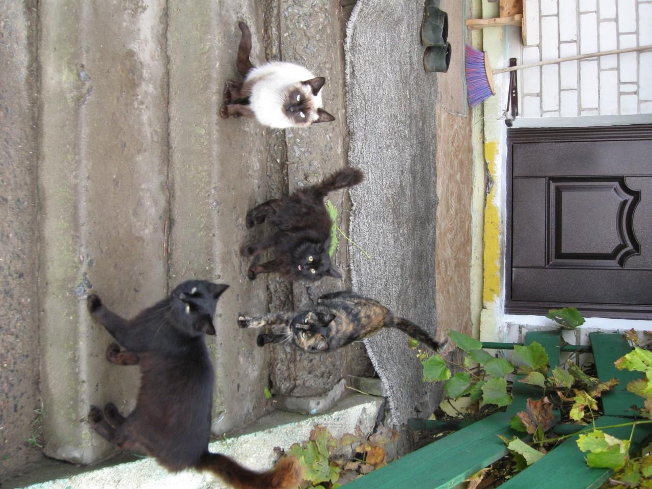 Братья наши меньшие: кошка знает, кто в доме обитает