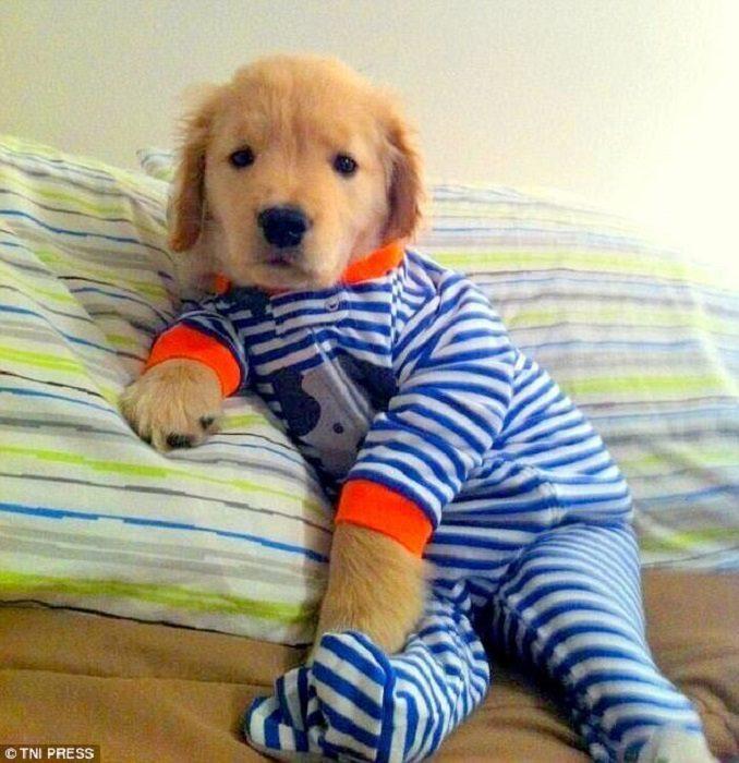 Щенки в забавных пижамах