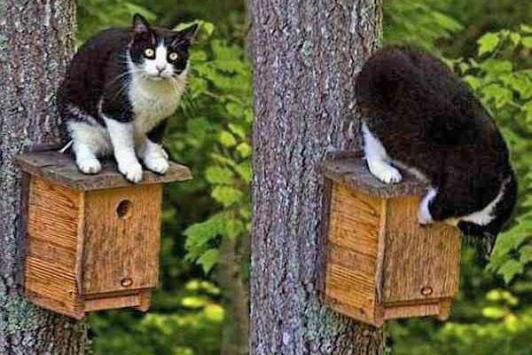 кот на скворечнике