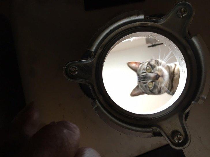 13 веселых котов