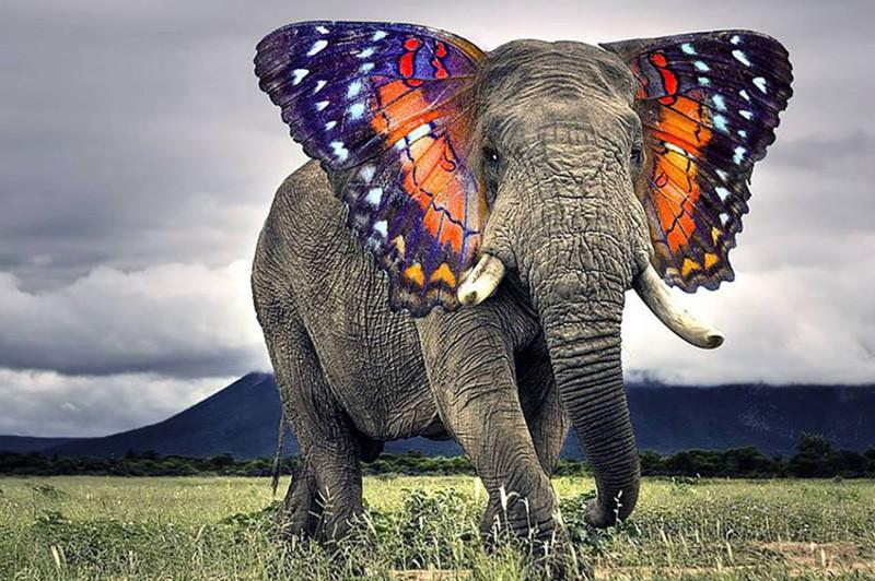 Целый выводок африканских одноразовых бабочек животные, прикол, юмор