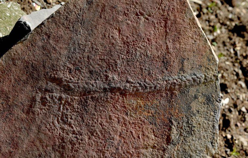 Найден самый древний в мире след живого существа