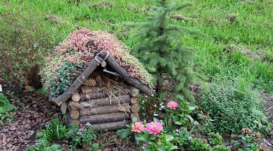 Необычные способы посадки обычных растений или как удивить соседей по даче