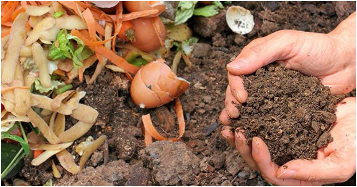 Несколько полезных способов использования кофейного жмыха в огороде