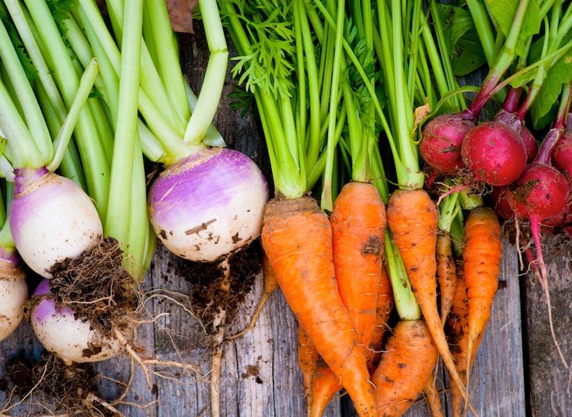 Подсохли огороды - сеем корнеплоды! Хитрости посева овощей