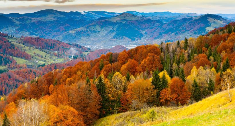 Все не так однозначно: как глобальное потепление сказывается на лесах Европы и России