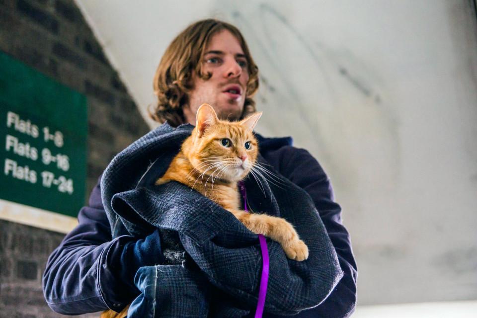 Кот Боб спас жизнь своего хозяина и помог ему купить дом