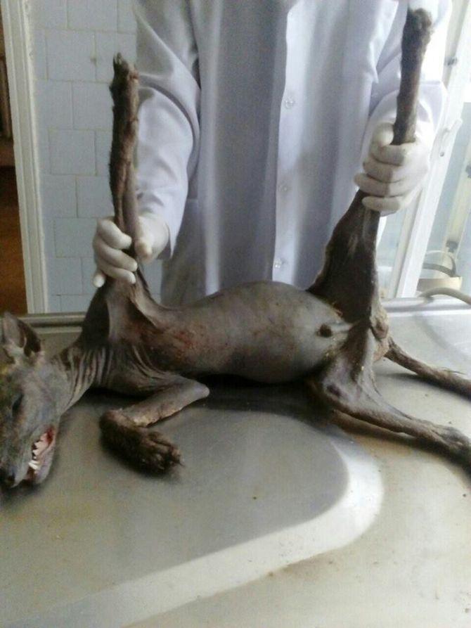 В Украине людей шокировал неизвестный зверь, которого поймали во дворе