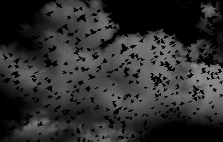 Массовое падение птиц с неба…