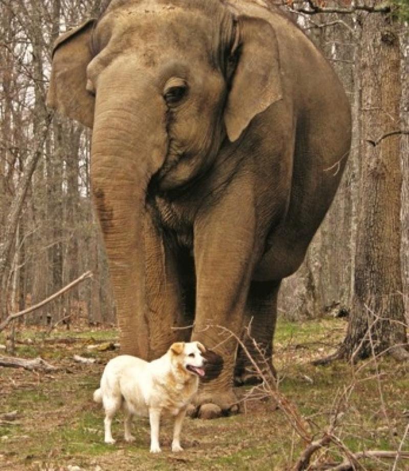 Слониха 3 недели стояла непо…
