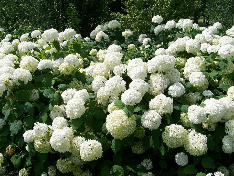 Болотные растения России: пальчатокоренник, плакун верболистий, калужница болотная