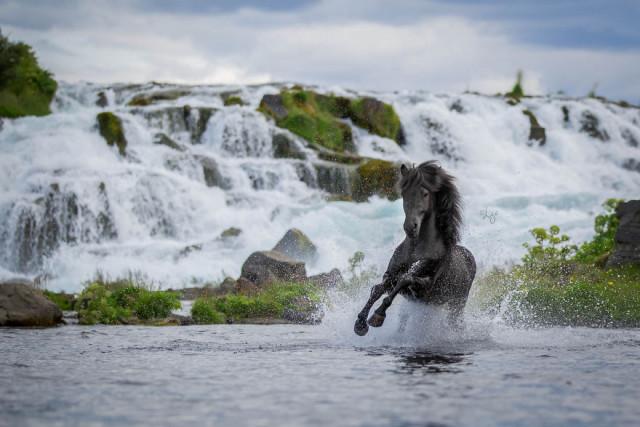 Лошади на фоне исландских пейзажей