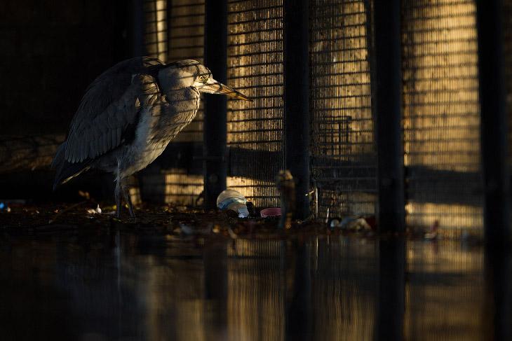 Призеры лондонского конкурса дикой природы Wildlife Photographer of the Year 2019