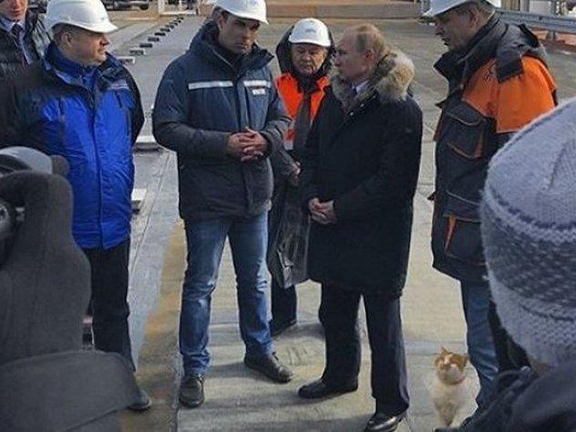 Путин прогулялся по Крымскому мосту в компании кота
