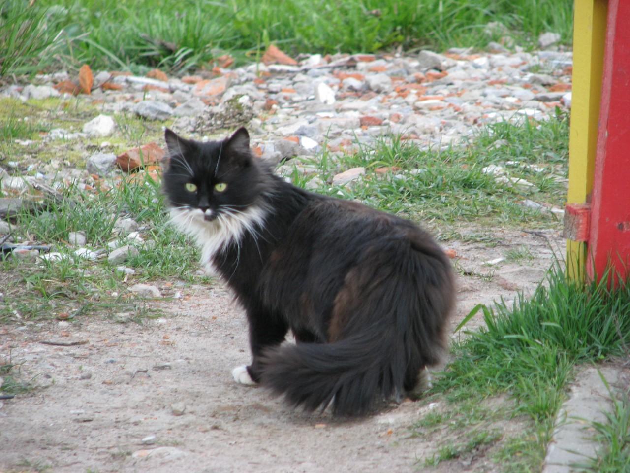Братья наши меньшие: о чем может предупредить кот?