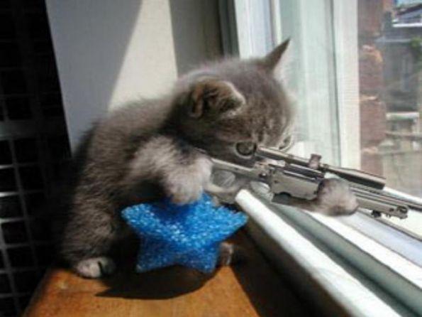 Месть кота