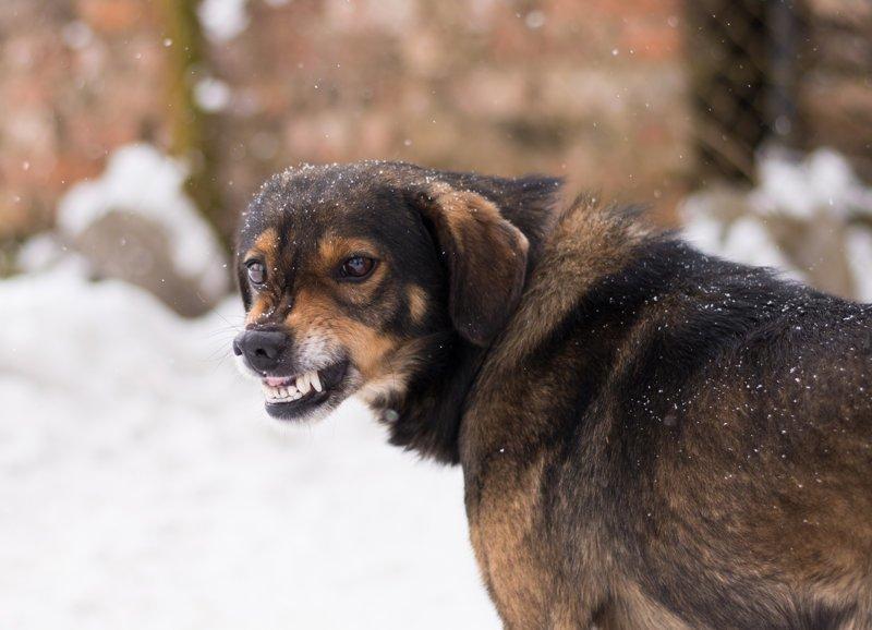 Когда и почему собаки нападают на человека?