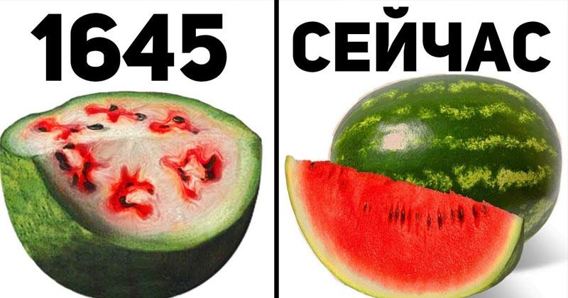 А вы знали, что несколько веков назад наши любимые продукты выглядели иначе. Вы будете удивлены!