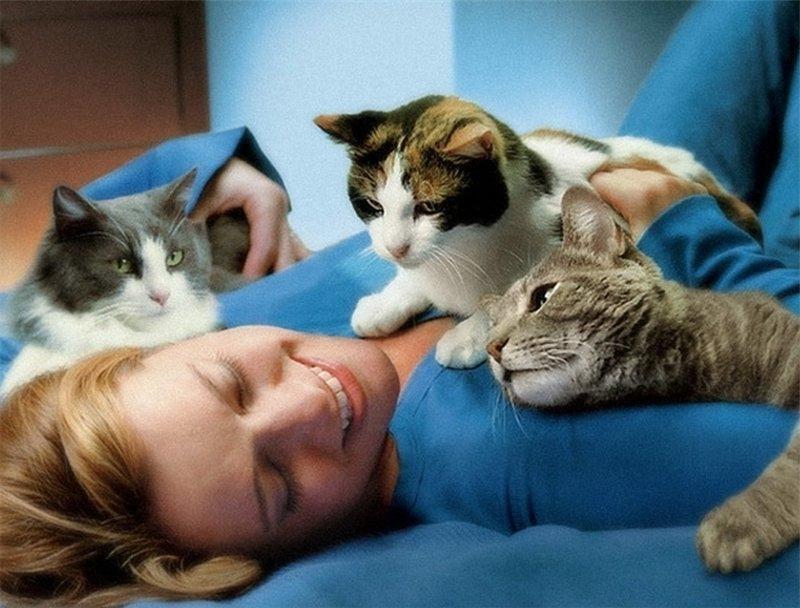 Чья любовь горячей? Собаки против котов: как они выбирают любимейшего человека в семье!