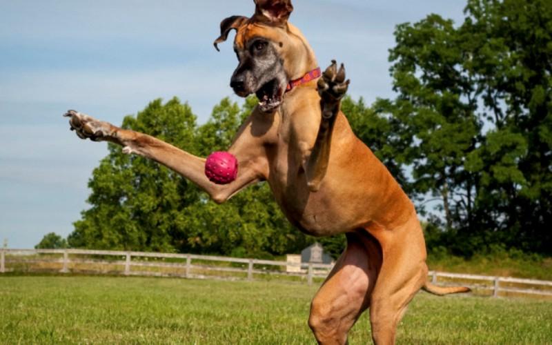 Мифы о больших собаках