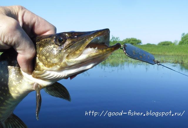 Рыбалка в Садах