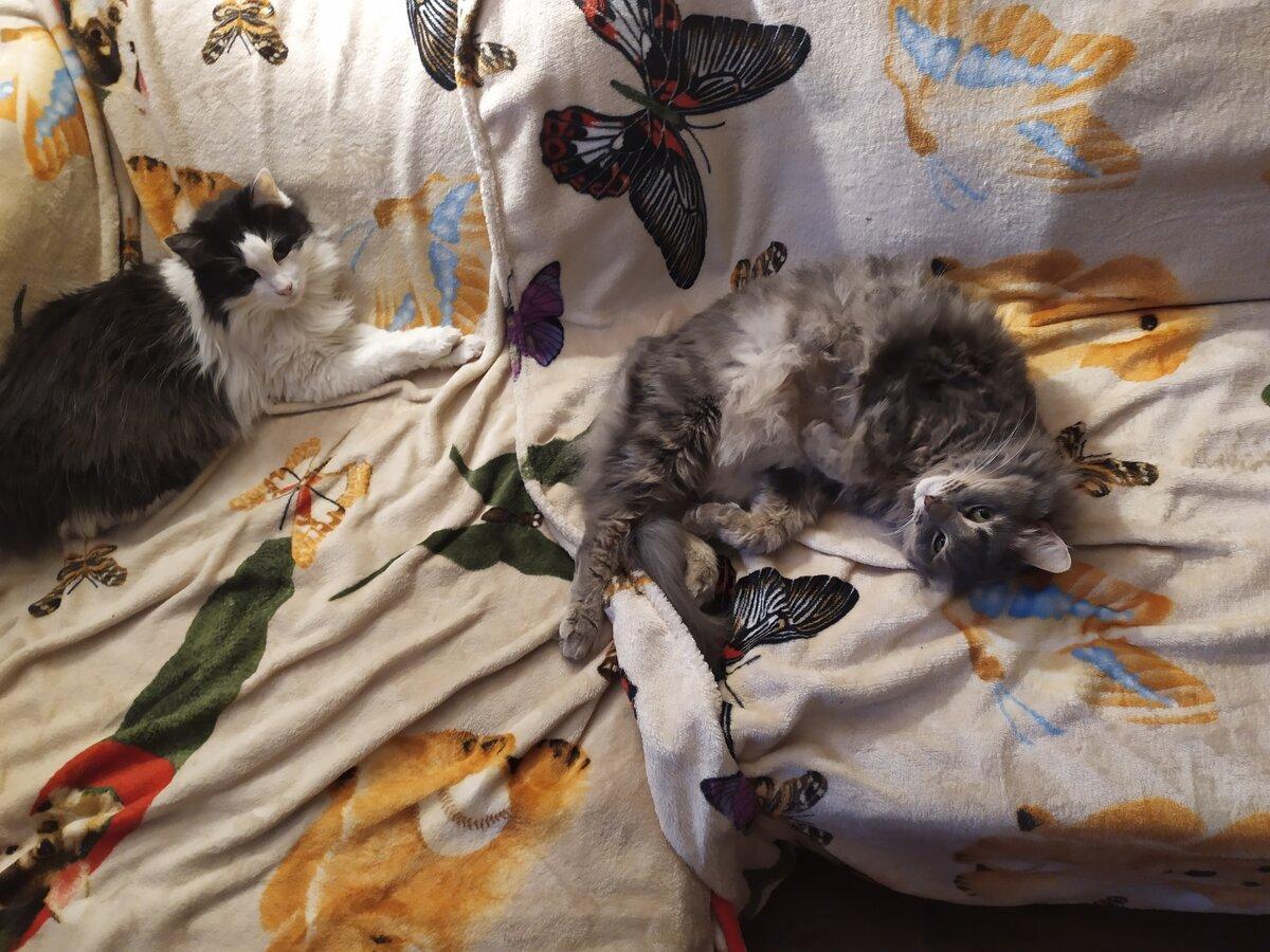 Осторожнее, котик, а то муху проглотишь! Сонные зевающие коты