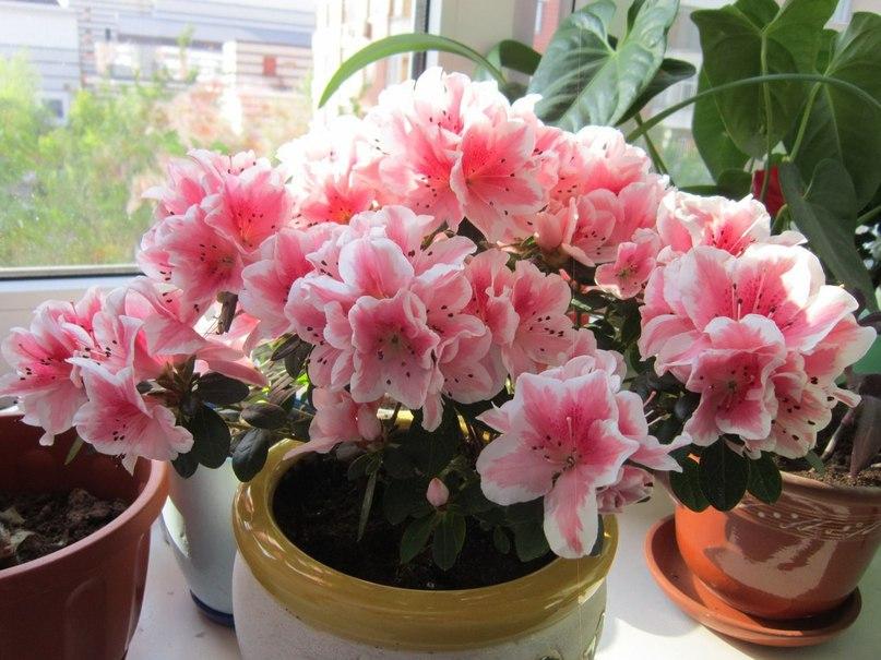 Как стимулировать цветение растения. БОЛЬШОЙ СЕКРЕТ ДЛЯ МАЛЕНЬКОЙ КОМПАНИИ