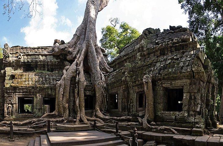 Камбоджийский храм Та Пром  и гигантские деревья