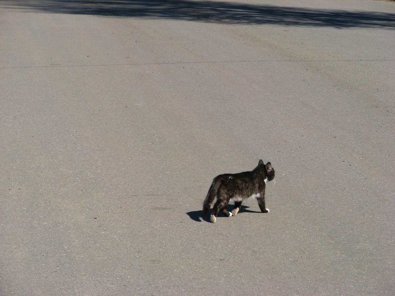 Братья наши меньшие: кот застрял в окне…