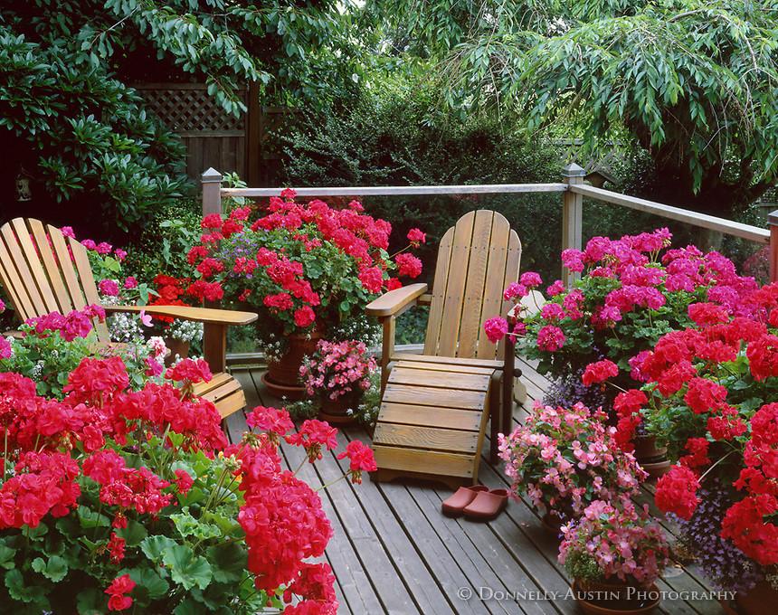 Красивоцветущие растения для сада фото и названия александрович