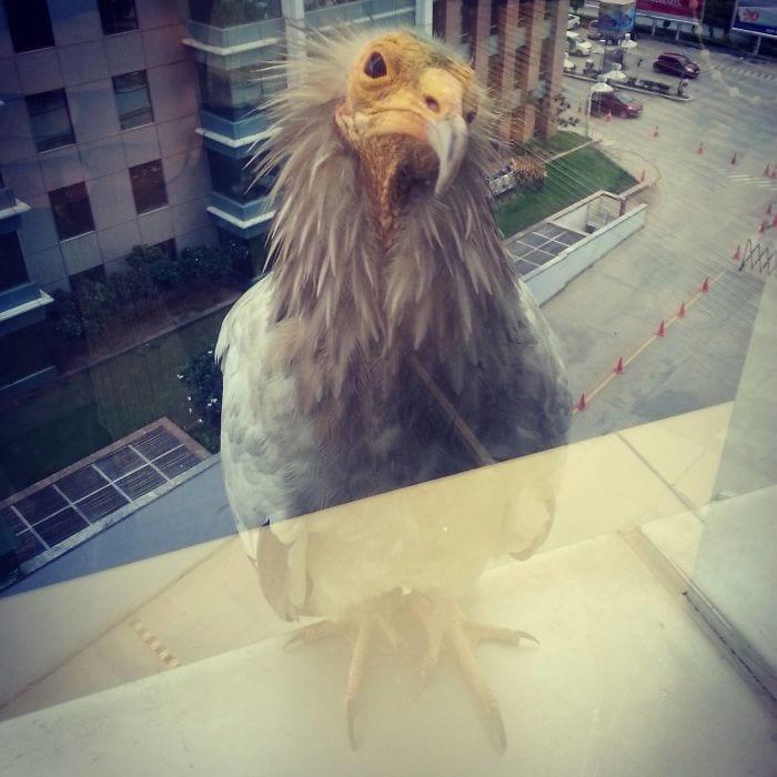 Так что эта птица сидит на моей панели окон на работе прямо сейчас
