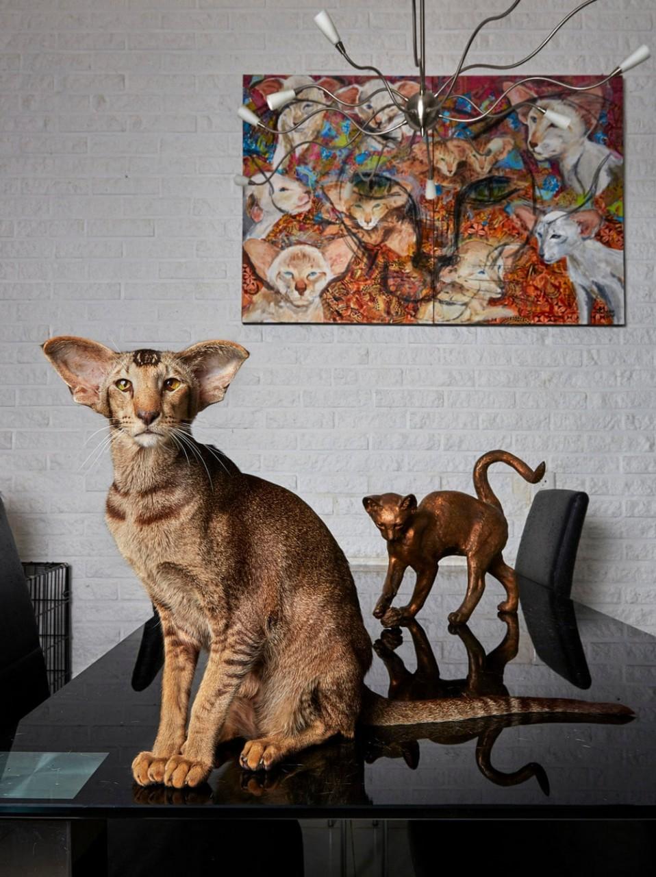 Портреты амстердамских домашних животных. Фотограф Изабелла Розендал 2