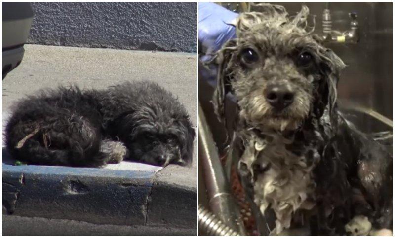 Грустная собака лежала посреди тротуара… Хорошо, что ее все-таки заметили!