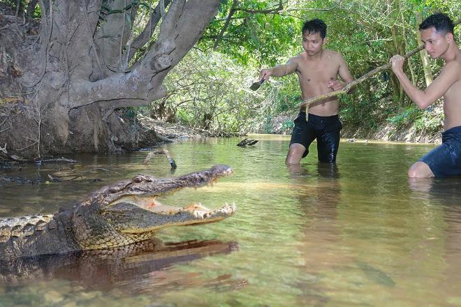 Как поймать и сьесть крокодила