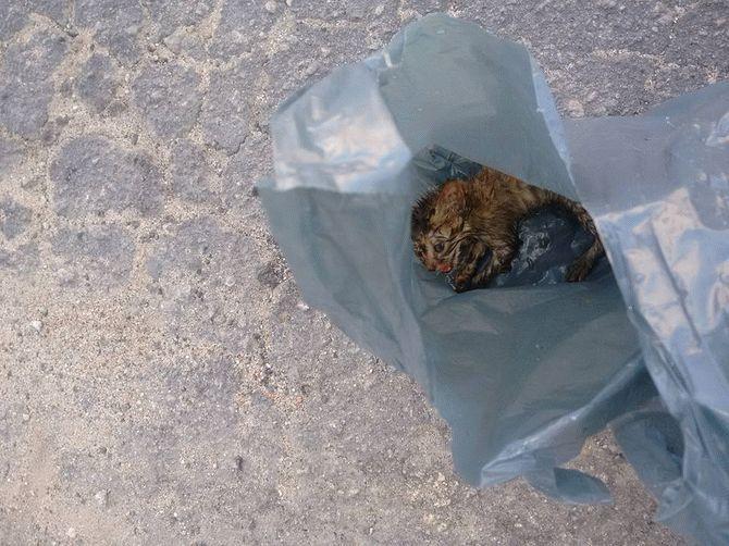 Этого плачущего котенка в мусорном пакете женщина случайно обнаружила на дороге….